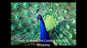 how to make the coolest peacock costume youtube