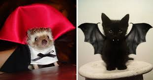 25 terrifyingly cute halloween costumes for pets bored panda