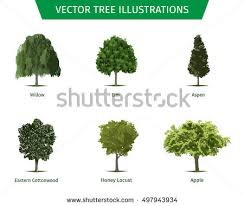 different tree sorts names illustrations tree stock photo photo