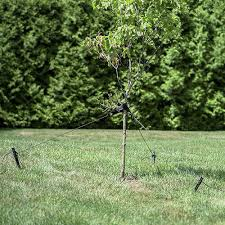 tree stakes heavy duty tree stakes oak hill unlimited mole traps deer