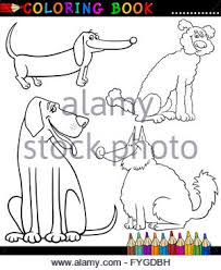 great dane dog cartoon for coloring stock photo royalty free
