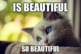 So Beautiful Meme - is beautiful so beautiful first world cat problems quickmeme