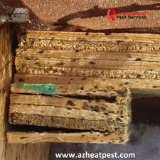 Bed Bug Nest Pictures Bed Bug Pictures And Videos What Do Bed Bugs Look Like