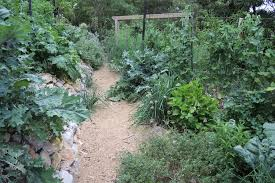 fruit and vegies to grow in the shade gardendrum
