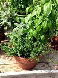 Herb Container Gardening Ideas Herb Container Garden What Need For Pizza Herb Container Garden
