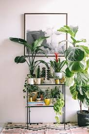 Indoor Decorative Trees For The Home Best 25 Indoor Plant Decor Ideas On Pinterest Plant Decor