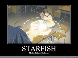 Starfish Meme - starfish anime meme com