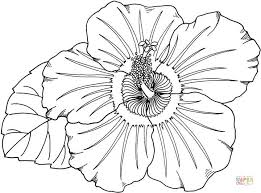 coloring pictures of hibiscus flowers hibiscus coloring page free printable coloring pages