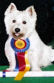 dog ribbon understanding scoring agilityfusion