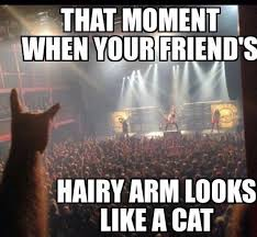 Funny Rock Memes - cat in rock concert cat friend funny funnyanimal funny