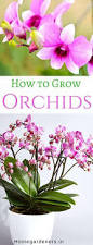 plants to grow indoors growing orchids how to care orchid plant indoors and outdoors