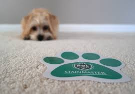 stainmasters carpet upholstery cleaning rambo s stainmaster carpet