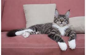 mon fait pipi sur le canapé toutes les taches toutpratique