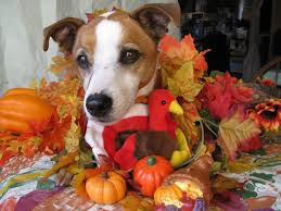 dogs alert pics for some happy thanksgiving cheer can