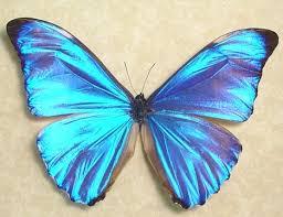 509 best butterflies and moths images on butterflies
