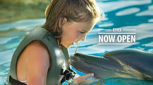 thanksgiving things to do things to do on thanksgiving in phoenix interact with dolphins