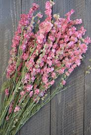 flowers for sale dried pink larkspur flowers pink delphinium dried larkspur
