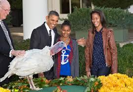 presidential turkey pardon msnbc
