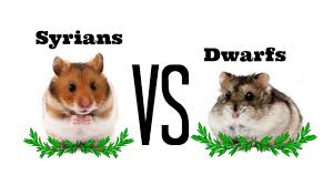 syrians vs dwarfs differences youtube