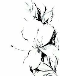 Flower Drawings Black And White - jasmine flower original drawing black and white art by canotstop