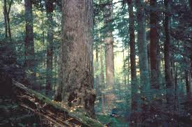 Tennessee forest images Npp temperate forest great smoky mountains tennessee usa 1968 jpg