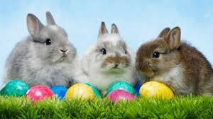 easter pictures why do we easter eggs and the easter bunny cbbc newsround