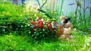 aquarium design exle moss tank first time in chennai design by jabbar aquarium design