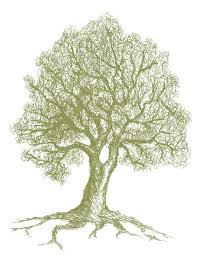 Oak Tree Drawing Sketch Every Day 3 21 11 Love Paper Paint
