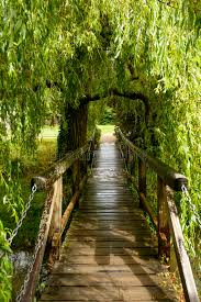 small wooden bridge willow tree at bishop palace stock
