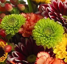 flowers in bulk cheap bulk flowers green button mums