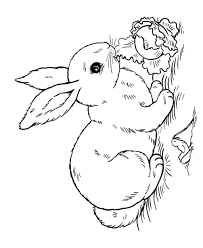 Color Bunny Colouring Pages Geekbits Org Rabbit Colouring Page