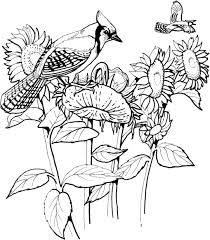birds u2013 free coloring pages