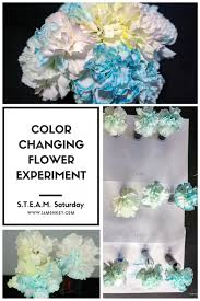 e flowers color changing flowers science experiment time lapse