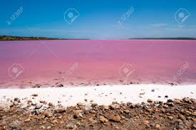 scenic colorful pink salt lake in western australia caused by