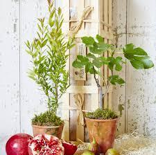 mini plants mini mediterranean plants gift crate by the gluttonous gardener