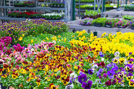 south central pennsylvania native plants pittsburgh garden centers and plant nurseries