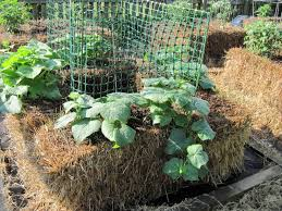 how to start vegetable gardening in straw bales