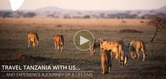 safari tanzania safari