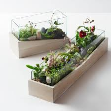 planter boxes u0026 terrariums west elm au