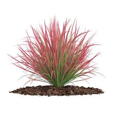 ornamental grass 4 3d model cgtrader