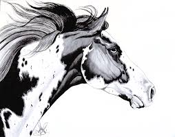 pictures ink sketches horses drawing art gallery