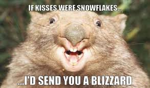 Wombat Memes - corny wombat meme by lilchovy memedroid