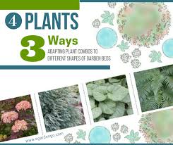 four plants three ways adapting plant combos to different garden