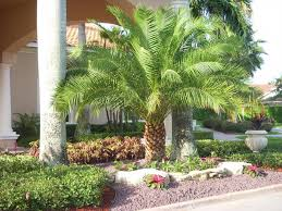 Front Yard Landscape Ideas by Front Yard Landscaping Ideas Miami Simple Front Yard Landscaping
