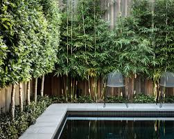 landscaping trees for privacy modern houzz