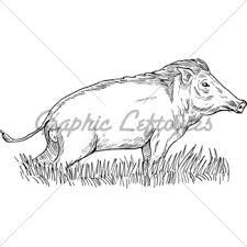 logo wild pig head gl stock images