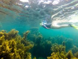 Nevada Snorkeling images Snorkeling on the north side of penguin island chantae was here jpg
