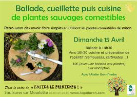 cuisine plantes sauvages comestibles balade cueillette puis cuisine de plantes sauvages comestibles