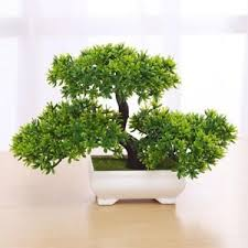 mini bonsai tree guest greeting pine table decor small potted