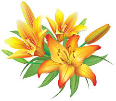 Lilies Flowers Yellow Lilies Flowers Decoration Png Clipart Image Gallery